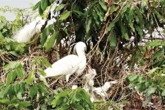Egretry 鷺鳥林