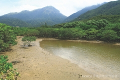 Mangrove and Mudflat
